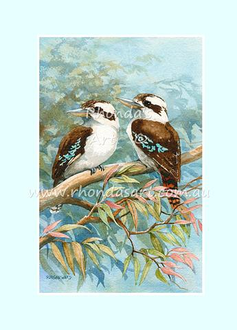 Kookaburra 35