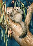 Brushtail Possum 3