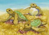 Three Hatchling Turtles