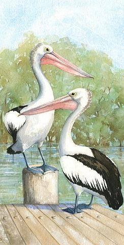 Pelicans om the Wharf