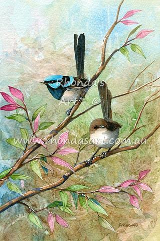 Blue Wrens 25