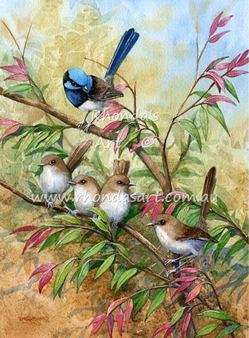 Blue Wrens 44