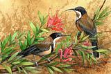 Eastern Spinebill 3
