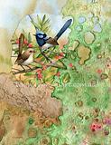 Blue Wrens M2