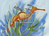 Weedy Sea Dragon 2