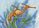 Weedy Sea Dragon 2