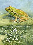 Original painting from My Egg - Green Golden Bell Frog