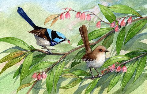 Wrens in Blueberry Ash