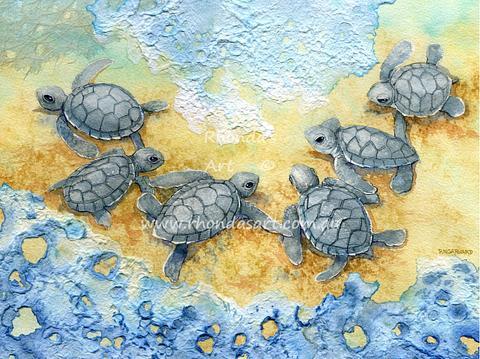 Little Turtles M1