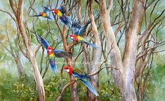 Eastern Rosellas in the Bush