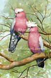 Galahs Revisited